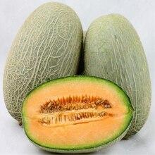 20pcs Cantaloupe fruit, creeping or climbing Vegetable fruit Chinese Xinjiang melon Delicious edible for Countyard