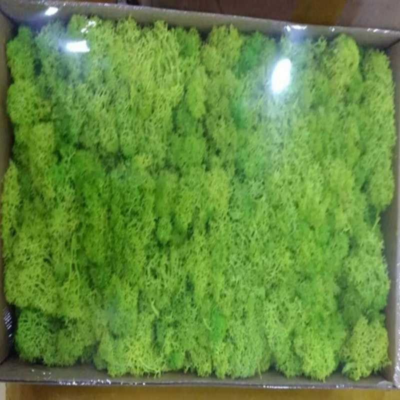 500g DIY Plant Wall Lichen Preserved Moss Home Office Wedding Party Decoration Christmas Gifts,Long Time Lasting Plant Flowers