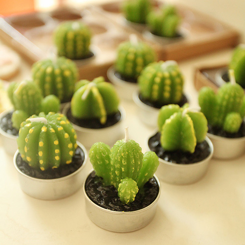 2 Pcs Lot Cute Kid S Birthday Mini Cactus Plant Party