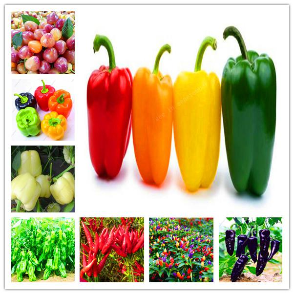 Sales! 500 Pcs Giant Spices Spicy Yellow Chili Hot Pepper Exotic Potted Bonsai Garden Plant For Flower Pot Planters Easy To Grow
