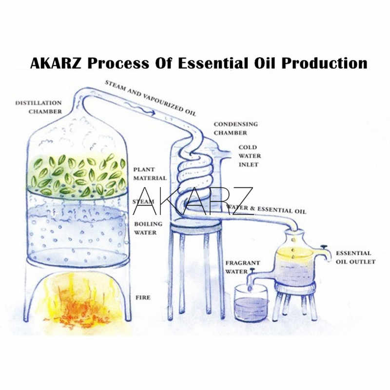 AKARZ Professional พืชใบ Series TOP ขายขายน้ำมันหอมระเหย aromatic สำหรับ diffusers น้ำมันหอมระเหย Body Care AROMA Oil
