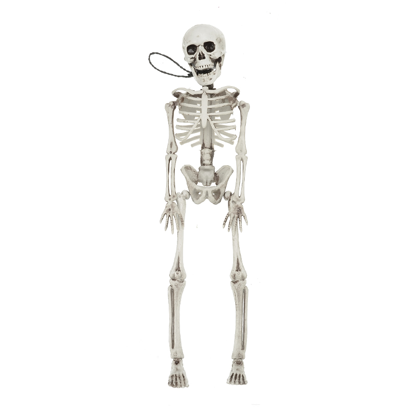 New Arrival 40CM Flexible Human Anatomical Anatomy Bone Skeleton Model Medical Medical Learn Aid Anatomy Art Sketch Wholesale