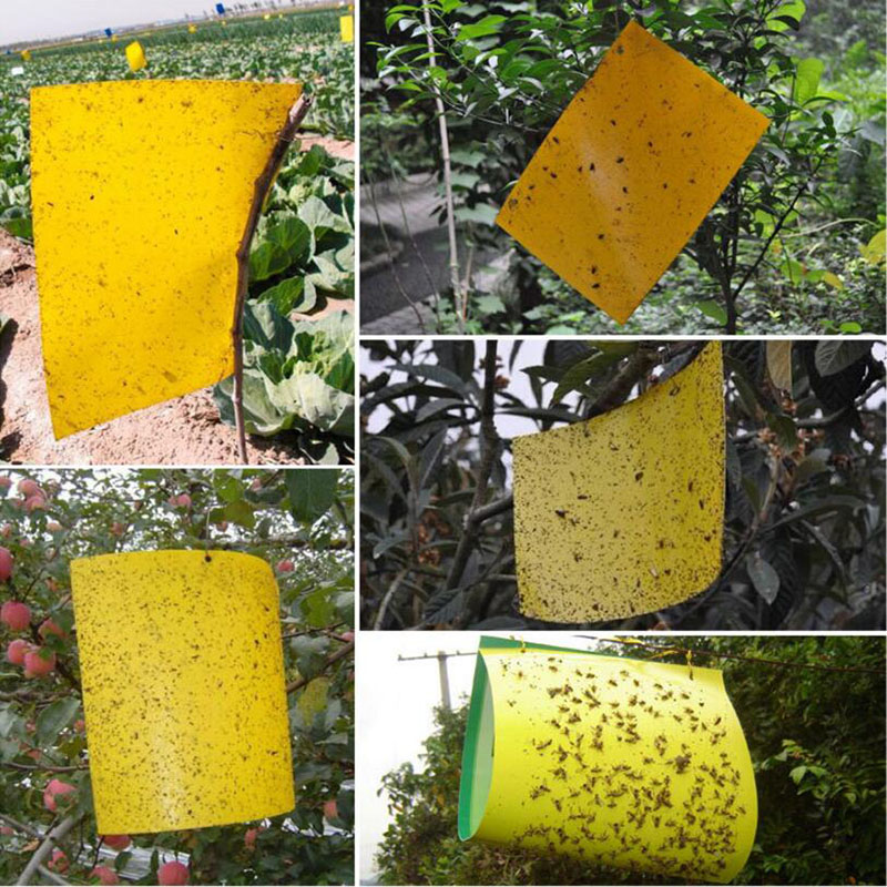 2pc Strong Insecticide Bait Sticky Insect Board Yellow Double-Sided Trap Board Greenhouse Fruit Fly Lure Board Garden Supplies