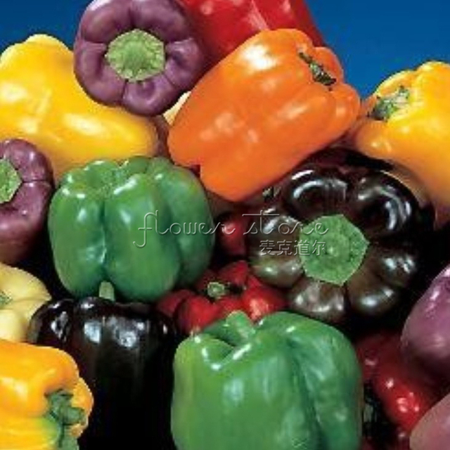 20c4127ec1ff 20 Rainbow Bell Pepper Seeds 100% Real seed High quality DIY Home Garden  Plant