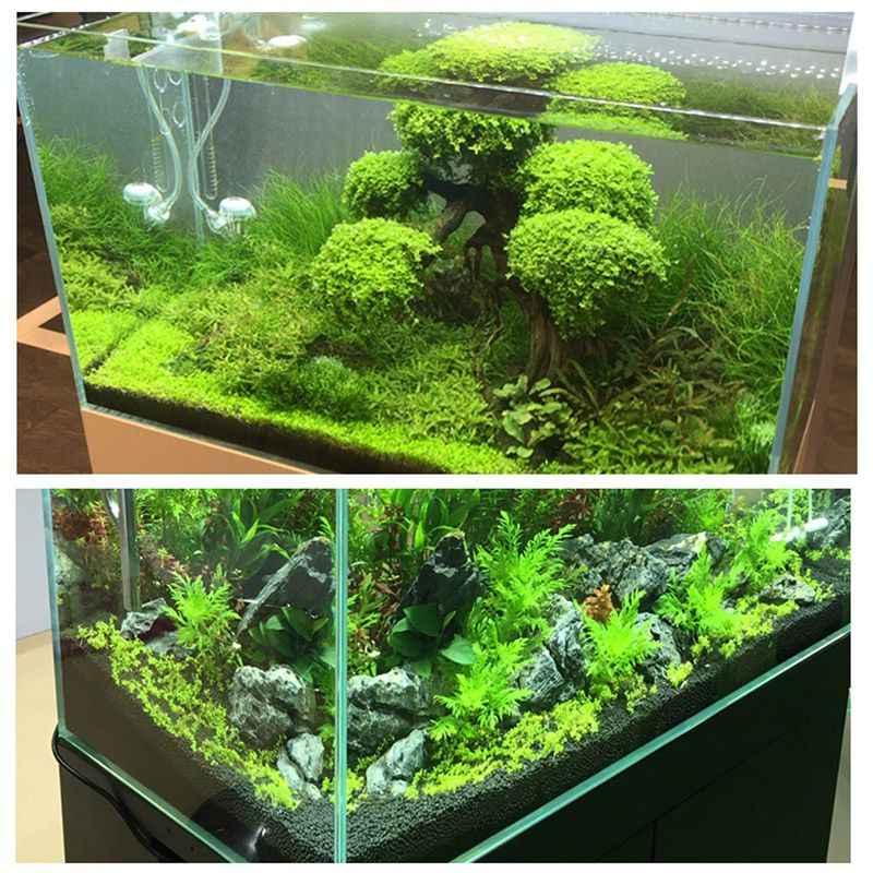 Plant Gravel Non Toxic Aquarium Plants