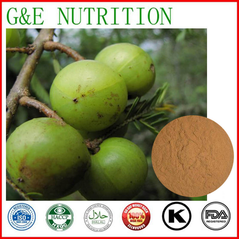 500g GMP Supplier Phyllanthus emblica/ Amla berry Extract with free shipping