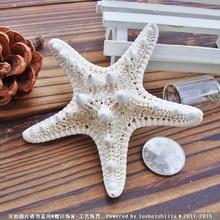 цена Shell coral Medium mandoo 5 - 7 yangtz decoration natural starfish beige white sea star wedding party