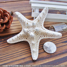 10pcs/lot Shell coral Medium mandoo 4-7cm yangtz decoration natural starfish beige white sea star wedding party(China)