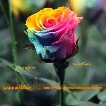 Очень Красивая Радуга Выросли Семян, 100 Семена/Пакет, роза Цветок Семена Бонсай Завод DIY Главная & Сад Земли Чудо