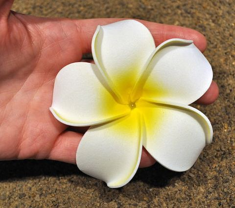 Flower hairpin side knotted clip hair accessory for wedding hair flower hairpin side knotted clip hair accessory for wedding hair dress hawaiian foam plumeria flower mightylinksfo
