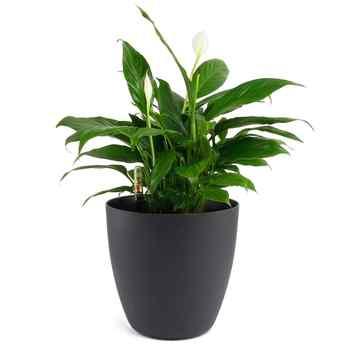 """11 \""""พลาสติก Self Watering Planter น้ำตัวบ่งชี้ระดับสีดำ, โมเดิร์นตกแต่งหม้อสำหรับพืชบ้านดอกไม้ - SALE ITEM บ้านและสวน"""