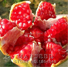 20 pcs/bag bonsai Pomegranate seeds home plant Delicious fruit seeds sweet