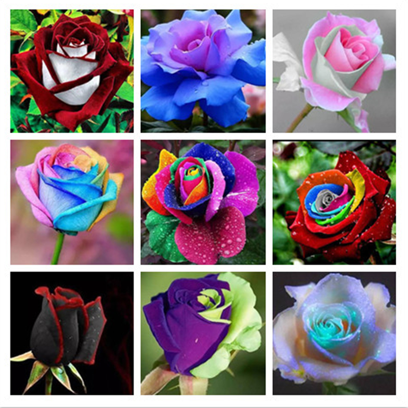 Popular Rose Garden Supplies Buy Cheap Rose Garden Supplies lots
