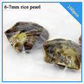100pcs 6-7mm freshwater rice pearl oyster in vacuum-packed