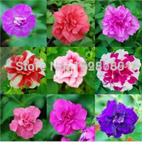 Free shipping 100 PCS Beautiful Flower Rainbow rose seed Rose Seeds