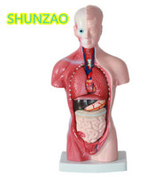 Human Torso Model 26CM Human Internal Organs Human Anatomy Torso Anatomical Model