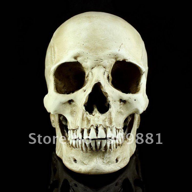 aliexpress : buy natural medical human skull model high, Skeleton