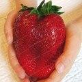 Bonsái fruta gigante fresa bonsái fruta orgánica reliquia jardín decoración planta 100 unids