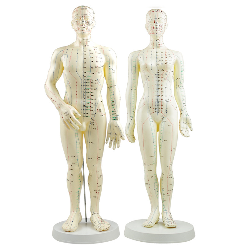 PVC Meridian Model Human Acupuncture Point Human Body