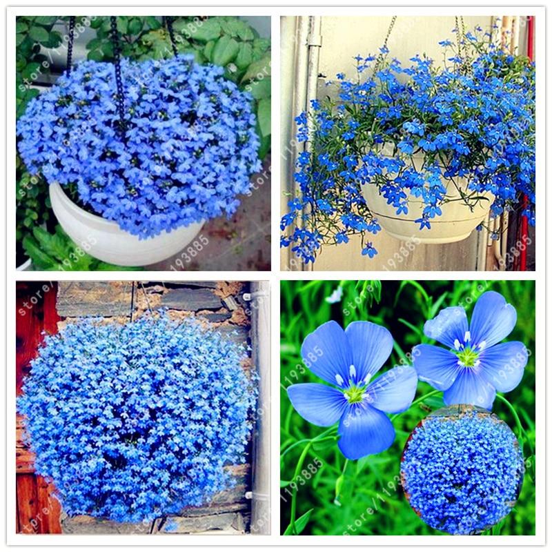 100pcs/bag blue flax seeds,planting flax seeds bonsai flower seeds handing plant bonsai potted for home garden