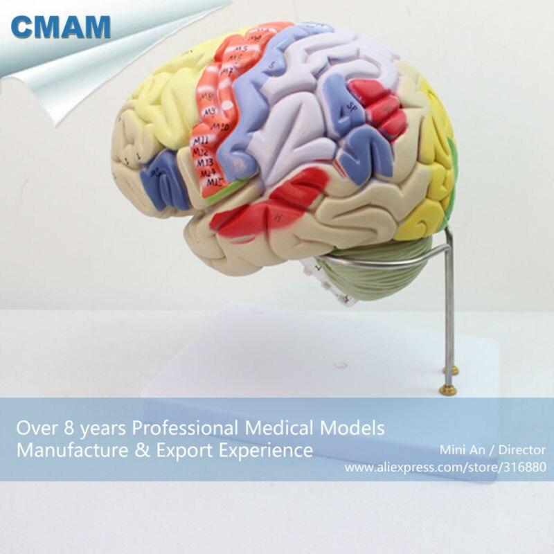 Aliexpress.com : Buy 12406 CMAM BRAIN08 Advanced Medical Usage 2X ...