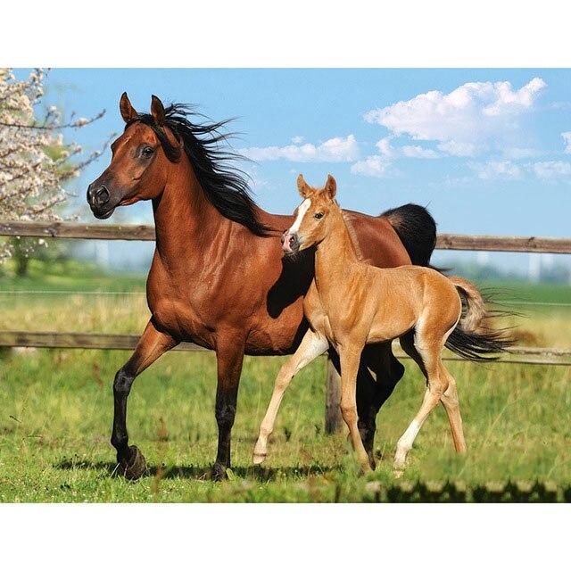 HOMFUN-Full-Square-Round-Drill-5D-DIY-Diamond-Painting-Animal-horse-Embroidery-Cross-Stitch-5D-Home.jpg_640x640