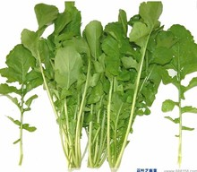 Hot Nutrition Mosaic Arugula bonsai Vegetable 100pcs