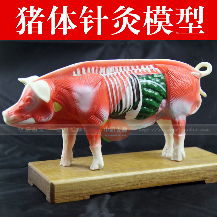 pig model animal acupuncture point model pig Anatomy Models teaching practice training 12005 cmam a05 dog acupuncture model animal acupuncture models for veterinarian s reference