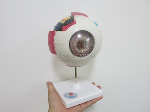 Image 2 - Modèles de lunettes 15CM de diamètre, de décoration spéciale, Figurines de décoration personnalisées en clinique, biologie, ophtalmologie, médecin