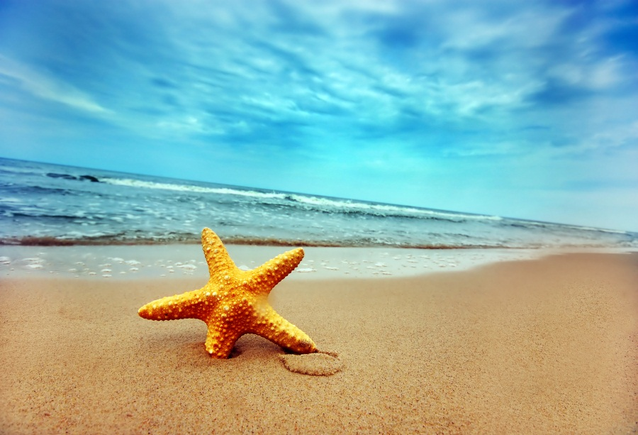 Laeacco Seaside Cloudy Waves Starfish Portrait Scene Photographic Backgrounds Customized Photography Backdrops For Photo Studio