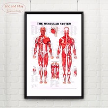 The Muscular Body System Canvas Art Print Painting Poster Wall Pictures For Room Decoration Home Decor No Frame
