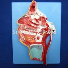Larynx Vessels model, with