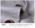 Nueva Venta Caliente de la Manera de Los Hombres del tamaño grande de algodón Chaquetas trinchera corta corea Casual abrigo negro azul gris de color caqui escudo plus tamaño 6XL