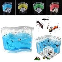 73X32X8 мм муравьиный домик игрушка для домашних животных развивающие забавные подарки экологический Лабиринт для живого муравья дети пластик маленькая научная ПЭТ муравья ферма