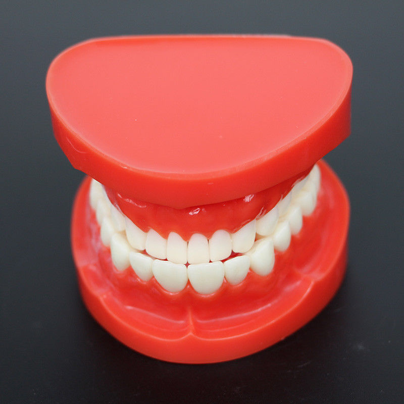 Dental Prosthesis Teeth Model Jaw Standard Typodont Demonstration Denture Teaching Model Dental Simulator Technician Tools dental retainer demonstration model orthodontics treatment model