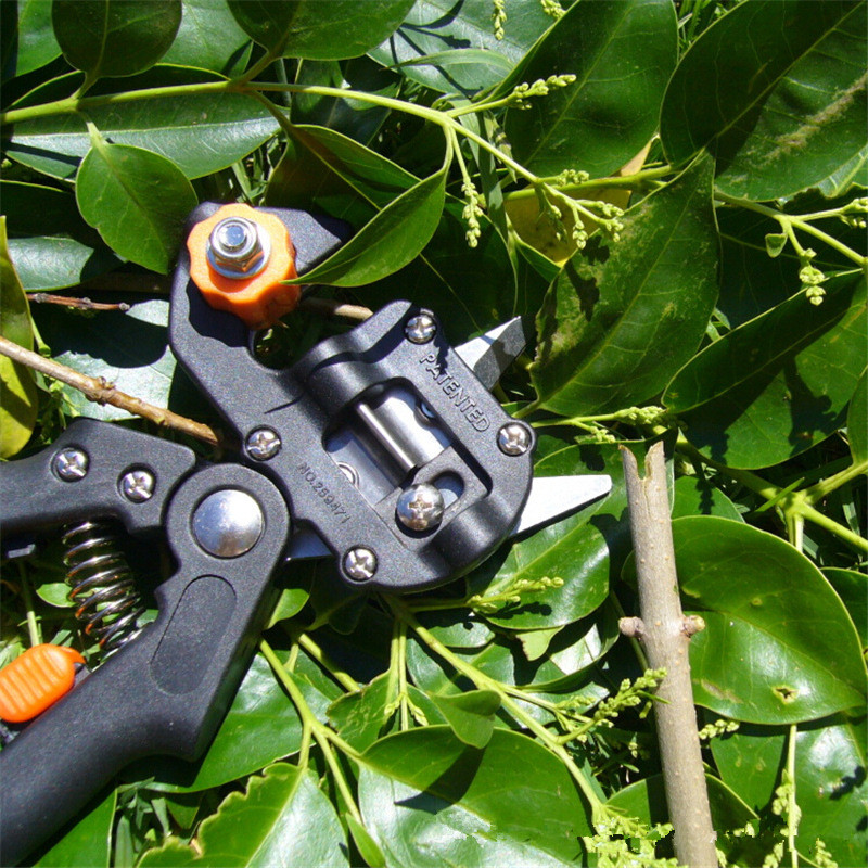 Branch Hand Packing Stem Strapping Pruning Tool