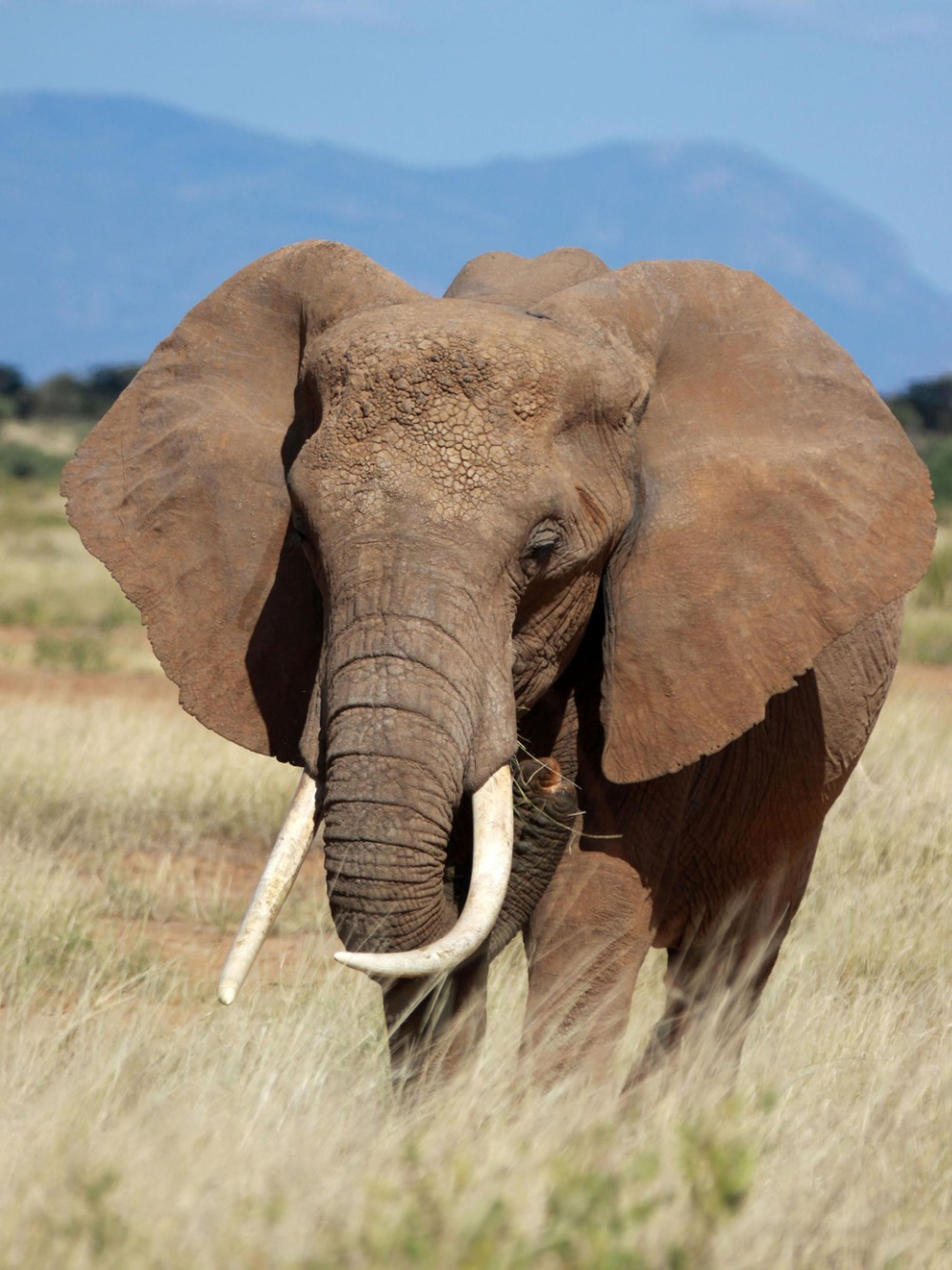 """African Elephants Fabric poster 17x13 / 32x24"""" Decor 07-in ... - photo#34"""
