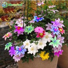 Loss Selling!!! 100PCS Bonsai Clematis Bulbs Wire Lotus Plant Seeds Multicolor Clematis Climbing plants Seeds