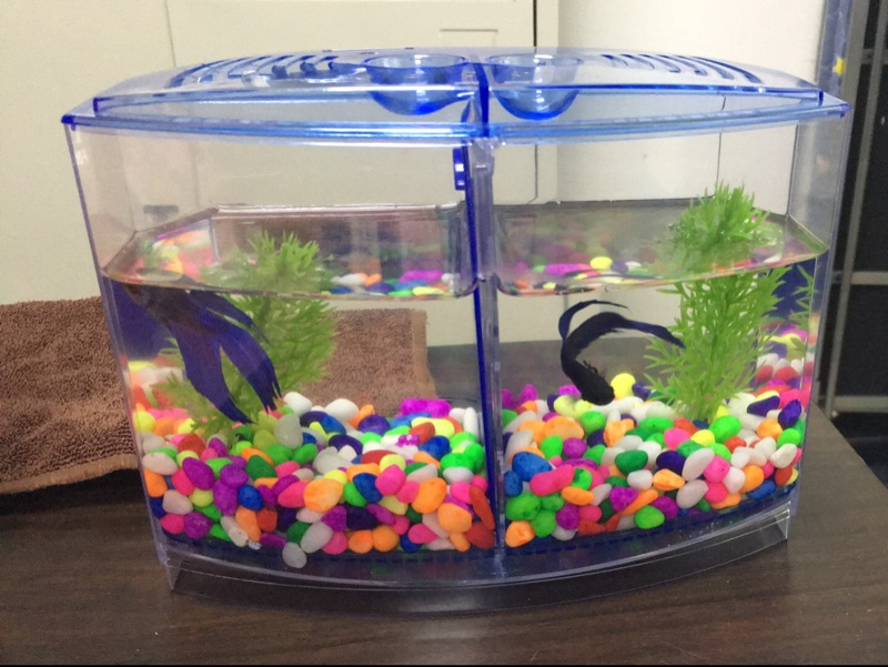 Betta Fish Mini Aquarium for two Betta Fish
