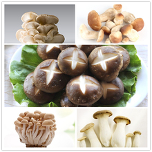 100pcs/bag Mushroom Seeds Funny Succlent Plant Edible Health Vegetable 25 Kinds Mushroom Seeds For Happy Farm Free Shipping
