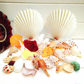 Concha shells natural conchas shells 400 g + two large scallops shells+ red and white coral Mediterranean style home decor