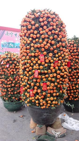 Como plantar arboles frutales en macetas casa dise o for Arboles frutales en maceta
