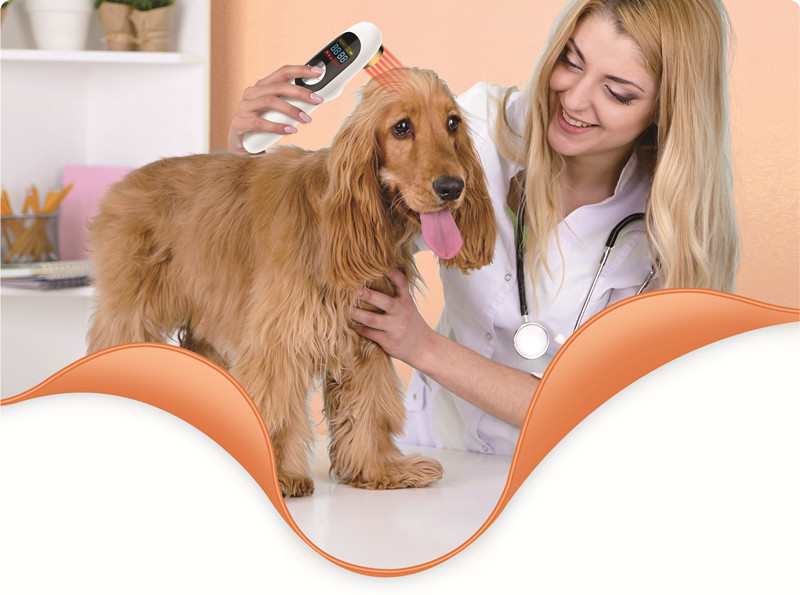 veterinary use protable lllt cold laser pain relief wound healing instrument for animals cold pain relief laser therapy treatment device for body pain arthritis prostatitis wound healing