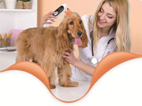 veterinary use protable lllt cold laser pain relief wound healing instrument for animals