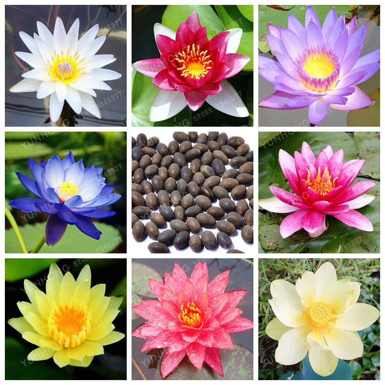 Top 10 Most Popular Water Garden Bowls Brands And Get Free
