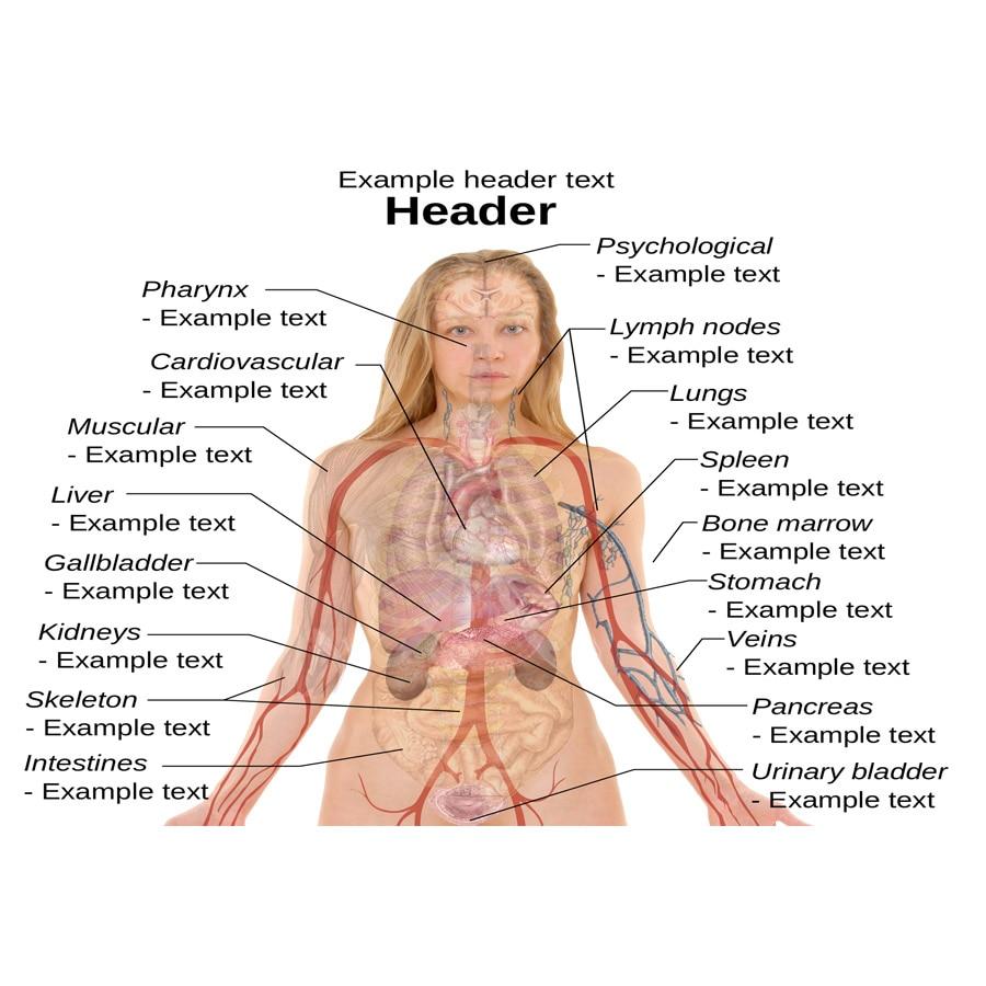 J0871 humano Cuerpo estructura anatomía Chart pop 14x21 24x36 ...