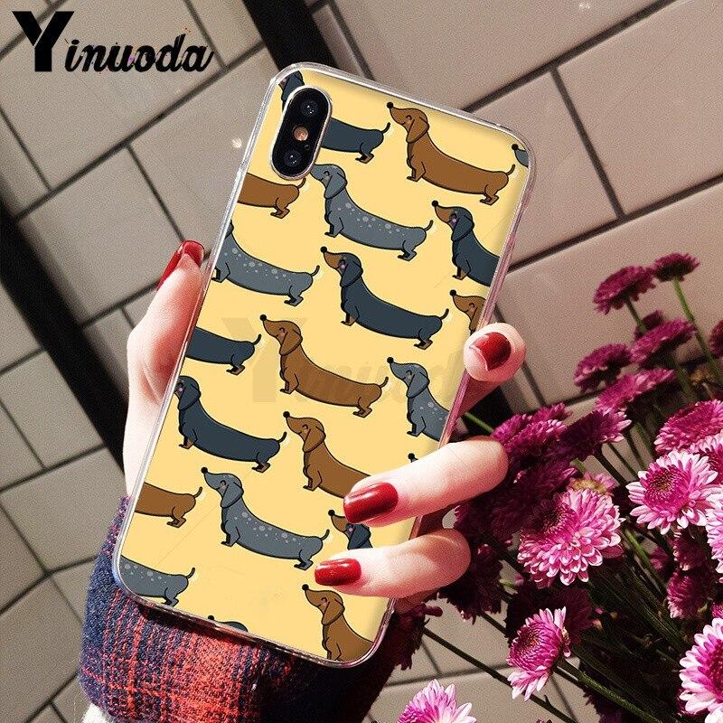 Animals Dogs Dachshund