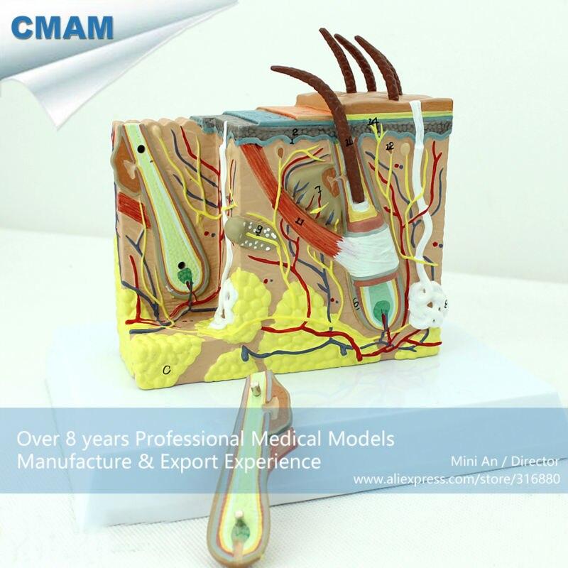 இ12531 CMAM-SKIN02 35 veces vida tamaño bloque de piel humano con ...