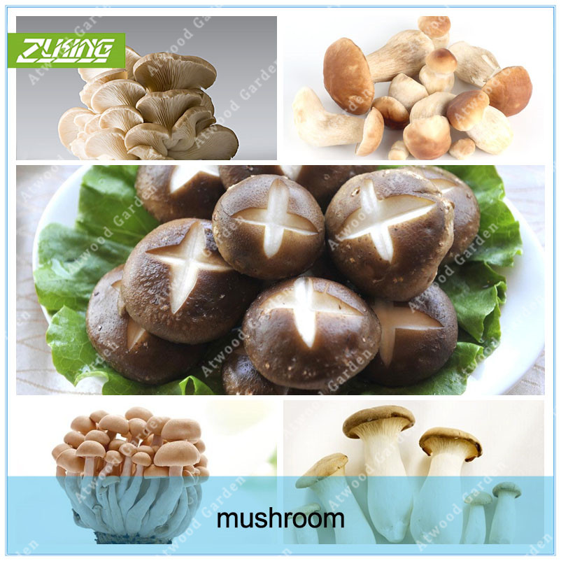 ZLKING 100 Pcs Mushroom Seeds Funny Succulent Plant Edible Health Vegetable 22 Kinds Delicious Mushroom Seeds For Happy Farm