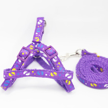 Colorful, fashionable yorkie traction harness